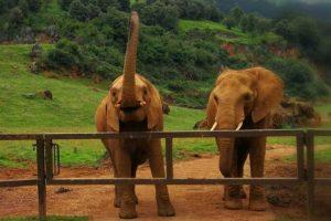 Funcionário de zoológico é morto por elefante na Espanha – ISTOÉ Independente
