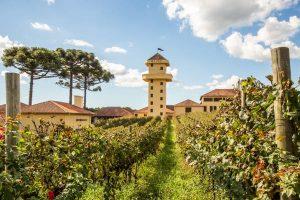 Clube NSC: vinhos e experiências na Vinícola Miolo