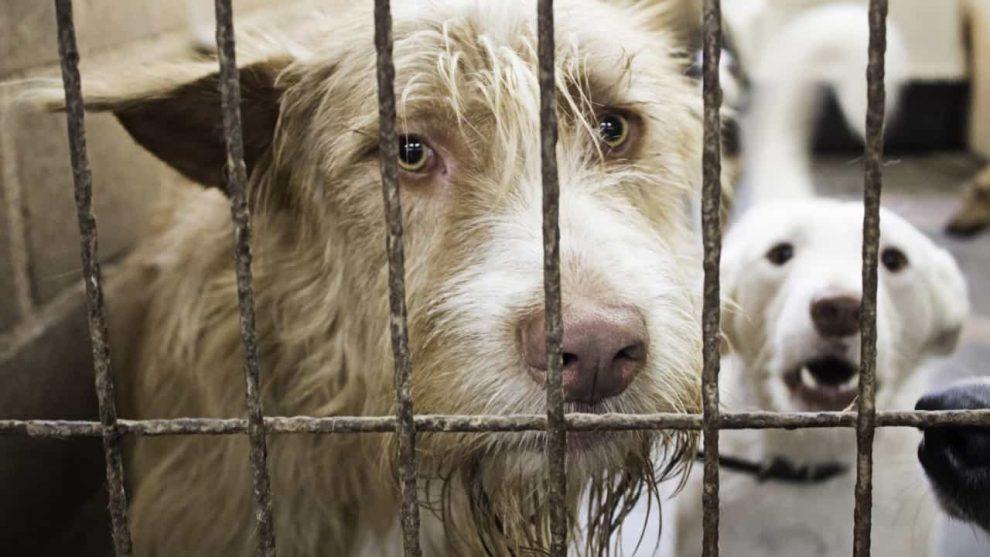 Sete milhões de euros para canis municipais e associações zoófilas